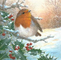 Robin Bird, Winter Scenery, Winter Pictures, Winter Art, Christmas Animals, Most Favorite, Robins, White Christmas, Happy Birthday