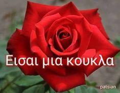 Karma, Flowers, Plants, Greek, Roses, Stickers, Pink, Rose, Plant