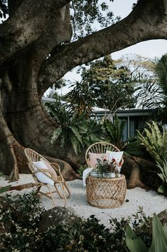 Cocktail styling by The Wedding Shed under the Fig Tree. Outdoor Rooms, Outdoor Gardens, Outdoor Living, Outdoor Decor, Tree Restaurant, Byron Bay Weddings, Backyard Play, A Frame House, Entertainment Area