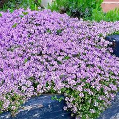 Flower Beds, Garden Projects, Planting Flowers, Gazebo, Exterior, Landscape, Green, Plants, Gardening