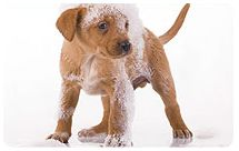 Natural Remedies For Puppy Dandruff
