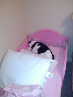 Awww my cat Sammy loves the Princess Bed, he didn't even wait for his pillow cases  purrrrrr