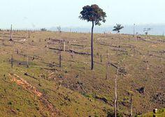 Mais de 1 milhão de hectares na Floresta Amazônica poderão ser explorados por madeireiras | #Amazônia, #Desmatamento, #Exploração, #Madeira, #Madeireiras, #MeioAmbiente, #Sustentabilidade