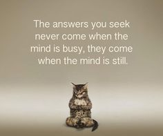 The Meditation Dojo Spiritual Wellness, Wellness Quotes, Happiness Comes From Within, Wellness Activities, Trust Your Instincts, Mindfulness Practice, Graphic Quotes, Yoga Meditation, Funny Cats