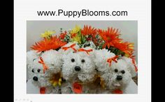 Puppy Bouquets