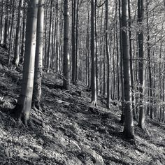 Beechwood in Beskydy Nature Photos