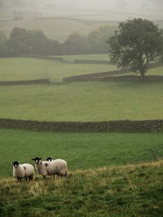 allthingseurope: England (by semitune / Flickr) — FUCKITANDMOVETOBRITAIN