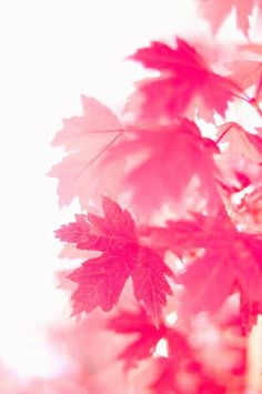 pink ✨   ᘡℓvᘠ❤ﻸ•·˙❤•·˙ﻸ❤□☆□ ❉ღ // ✧彡☀️● ⊱❊⊰✦❁ ❀ ‿ ❀ ·✳︎· ☘‿WE OCT 11 2017‿☘ ✨ ✤ ॐ ♕ ♚ εїз ⚜ ✧❦♥⭐♢❃ ♦•● ♡●•❊☘ нανє α ηι¢є ∂αу ☘❊ ღ 彡✦ ❁ ༺✿༻✨ ♥ ♫ ~*~♆❤ ✨ gυяυ ✤ॐ ✧⚜✧ ☽☾♪♕✫ ❁ ✦●❁↠ ஜℓvஜ