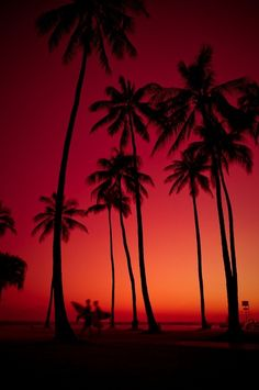 Red sunset summer colorful sky sunset beach red palm trees black orange  <3 <3 <3 <3 <3 !!!!!  :D  ~KNB~*