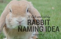 Best, Unique Rabbit Names Idea [Udpated] Boy Rabbit Names, Bunny Names, Funny Rabbit, Pet Rabbit, Unique Animals, Adorable Animals, Giant Bunny, Dwarf Bunnies, Rabbits