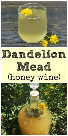 Dandelion Mead Recipe (Dandelion Wine Made With Honey) Learn how to make dandelion mead with your foraged dandelions! It is similar to the old school recipe for dandelion wine, but made with honey instead. Homemade Wine Recipes, Homemade Alcohol, Homemade Liquor, Dandelion Recipes, Mead Recipe, Dandelion Wine, Honey Wine, Wine Deals, Gourmet