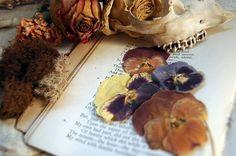 Dried flowers, browns, purples Purple Color Combinations, Dry Plants, Pansies, Dried Flowers, Light In The Dark, Flower Art, Stuffed Mushrooms, Vegetables, Autumn