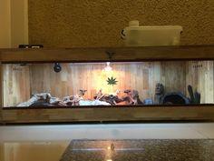 Learn how to set up a bearded dragon enclosure here. Bearded Dragon Enclosure, Bearded Dragon Cage, Window Ventilation, Large Terrarium, Glass Cages, Front Windows, Baby Dragon, Pet Shop, Sliding Doors
