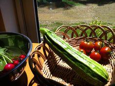夏野菜たち ズッキーニもお庭から