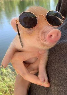 деловая хрюша Cute Baby Pigs, Cute Baby Cow, Cute Piglets, Baby Animals Super Cute, Cute Wild Animals, Cute Little Animals, Cute Funny Animals, Baby Piglets, Baby Farm Animals