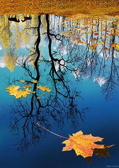 autumn leaves floating in beautiful blue water with reflection of trees and horses Pretty Pictures, Cool Photos, Amazing Photography, Nature Photography, Reflection Photography, Candy Photography, Reflection Art, Water Reflections, Photography Photos