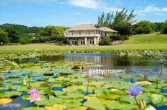 Stock Photo : Cotton House In Mustique Island, St Vincent And The Grenadines, West Indies