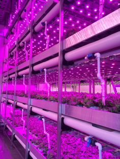 "Vertical farming grows food faster without sunlight, less soil, and right in a city. ""The salad greens are raised in such immaculate conditions, there is no need to wash the leaves before sampling"" hidroponia para leer Greenhouse Farming, Indoor Farming, Indoor Aquaponics, Hydroponic Gardening, Indoor Gardening, Vertical Hydroponics, Aquaponics Plants, Aquaponics System, City Farm"