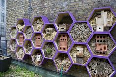 Hive of activity: The 'Bee & Bee' features 'condominiums' for solitary bees and 'bijou boxes' for social bees Dog Houses, Bird Houses, Plan Hotel, Permaculture, Bee Friendly Plants, Bee Hive Plans, Bug Hotel, Raising Bees, Bee House