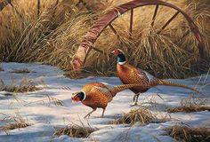 Pheasant Art; Heartland Heritage Print by Rosemary Millette : Wild Wings
