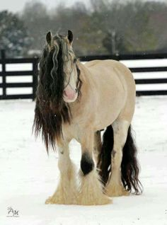 This horse ♥