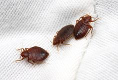 Keeping The Bugs Away: Pest Management Tips You Can Now Use - Pest & Insect Control Bed Bug Control, Mice Control, Rid Of Bed Bugs, Earwigs, Bed Bugs Treatment, Flea Spray, Pest Management, Pest Control Services, Humming Bird Feeders