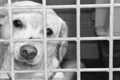 Nada de animais em gaiolas e vitrines! - http://metropolitanafm.uol.com.br/novidades/life-style/nada-de-animais-em-gaiolas-e-vitrines