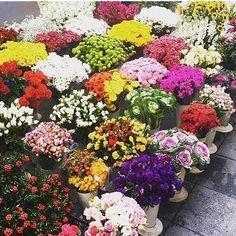 Happy new week,İyi haftalar KADIKOY ISTANBUL TURKEY