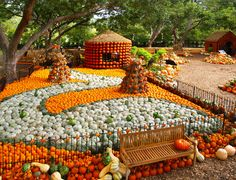 Everything's bigger in Texas, even the pumpkin displays. If you want all of your pumpkin dreams to come true, then you have to visit Autumn at the Arboretum in Dallas. Pumpkin Topiary, Pumpkin Carving, Pumpkin Garden, Pumpkin Pumpkin, Types Of Pumpkins, Pumpkin Display, Dallas Arboretum, Garden Show, Garden Features