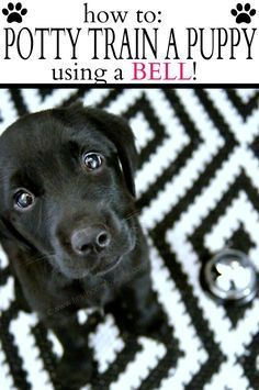 Potty Training Puppy Using a Bell - First Home Love Life: