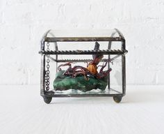 Little Miss Seawitch - REAL Octopus on India Crystal in Beveled Glass Jewelry Box. $375.00, via Etsy.    I know this isn't a terrarium, but it's fucking awesome!