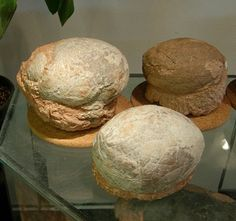 Fossil Picture Gallery: Dinosaur Eggs