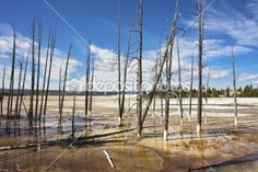 The dried up trunks of trees — Stock Photo #6660046