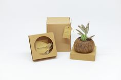 Au Naturel | Ecological Garden Plant Packaging https://www.behance.net/gallery/31372617/Au-Naturel-Ecological-Garden