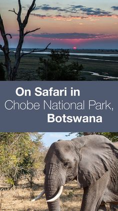 Chobe National Park. Three days in Chobe National Park, Botswana.