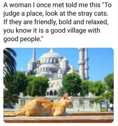 I Love Cats, Cute Cats, Funny Cats, Funny Animals, Cute Animals, Travel Pictures, Cool Pictures, Hilarious Pictures, Cat Memes