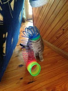 OMG the cats stuck in a slinky