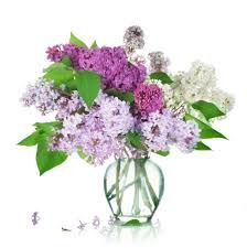 Image from http://www.freegreatpicture.com/files/62/25972-hd-purple-flowers.jpg.