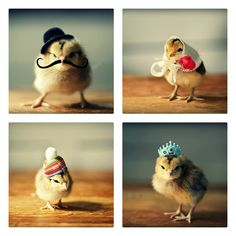 Chicks In Hats Notecards 4 Pack. If I had chicks, I would totally dress them up!