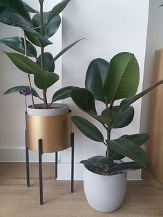House Plants Decor, Home Garden Plants, Plant Decor, Indoor Garden, Home And Garden, Indoor Plant Pots, Outdoor Plants, Ficus, Rubber Plant