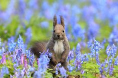 "Squirrel: ""Framed By Flowers."" (Photo By: SAM on 500px.)"