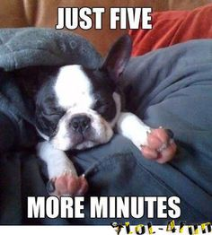 Please 5 more minutes. Funny dogs - http://lol-4fun.blogspot.com/