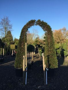 Yew arch