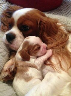 Mommy and Baby...