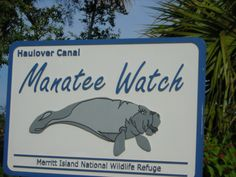 I Remember The Manatee's In Our Backyard <3 (We Had A Canal Behind Our House With A Dock, Lol)