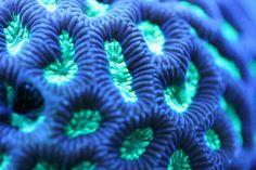 Corales: caleidoscopios naturales