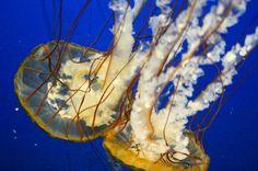 Jellyfish Toledo Zoo's Aquarium https://anniewearsit.com/