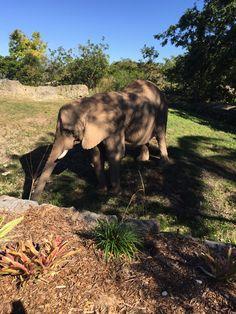Zoo Miami elefante 🐘