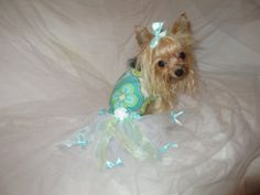 Special Occasion Party dog dress with white by DarlingDivaOutfits, $27.99
