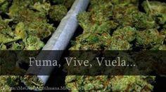 Veronica28 para #GrowLandiaComunidad - http://growlandia.com/highphotos/media/hsuk/
